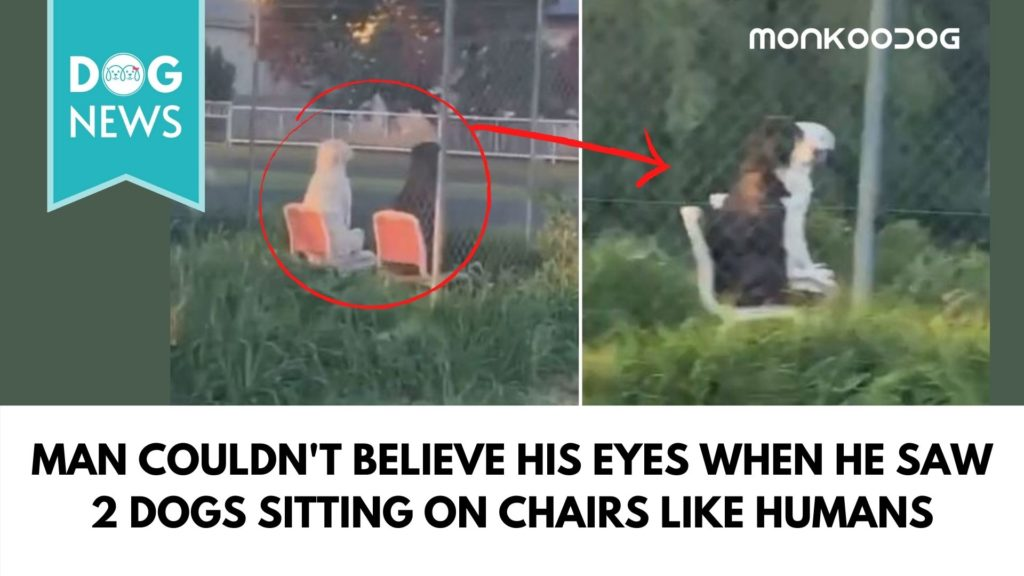 Bizarre video of two dogs sitting like statues on chairs along roadside park goes viral.