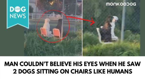 Bizarre video of two dogs sitting like statues on chairs along a roadside park goes viral