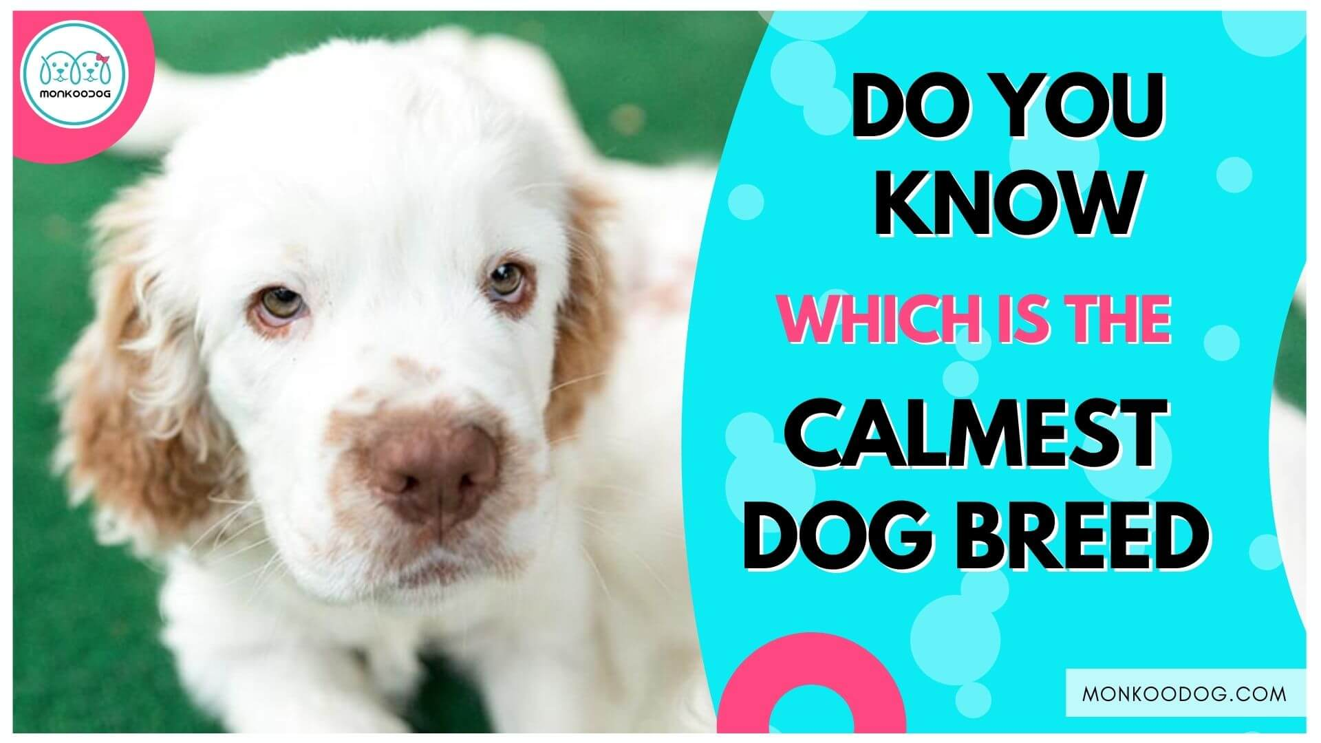 Top 3 Calmest Dog Breeds Perfect for New Owners & Kids