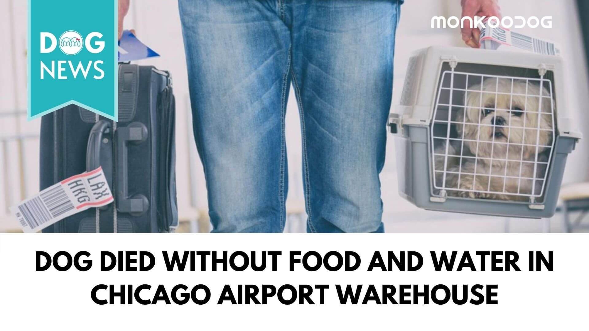 Dog Died Without Food And Water In Chicago Airport Warehouse; Airline In Trouble