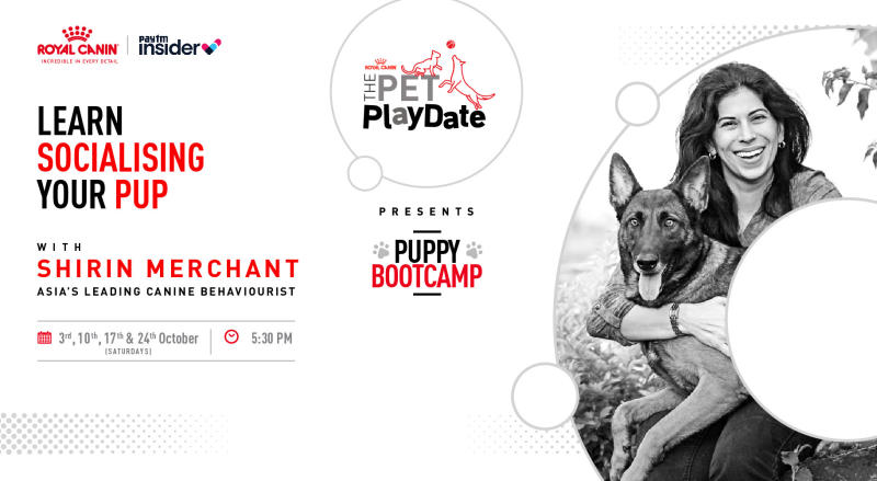 The Pet Playdate with Royal Canin Feat
