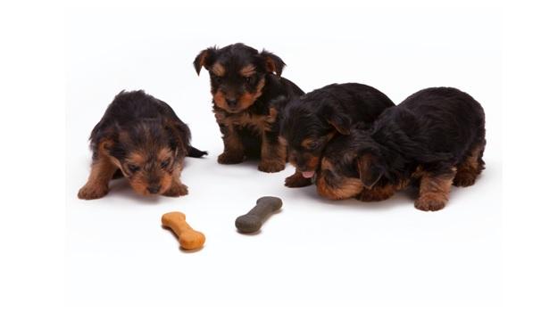 How Do I Help My Dog