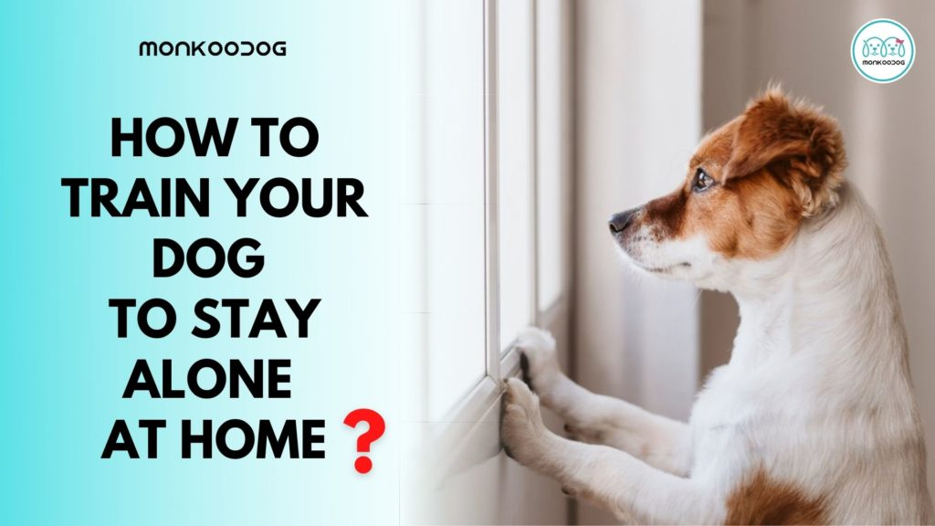 How To Train Your Dog To Stay At Home Alone