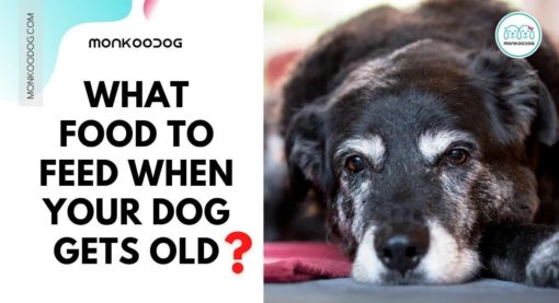 How To Buy The Best Senior Dog Food