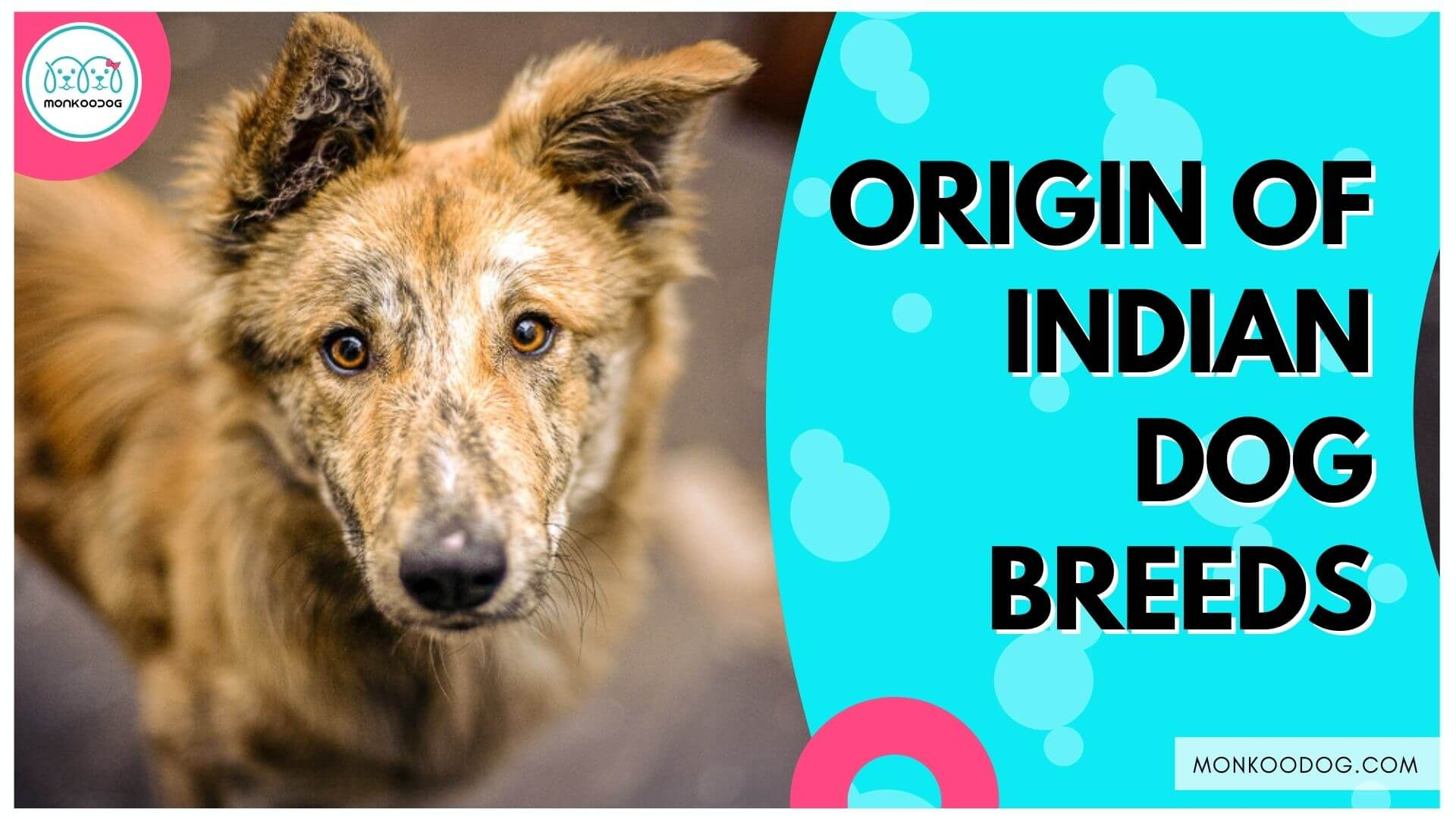 Origin of Indian Dogs: Indian Dog Breeds