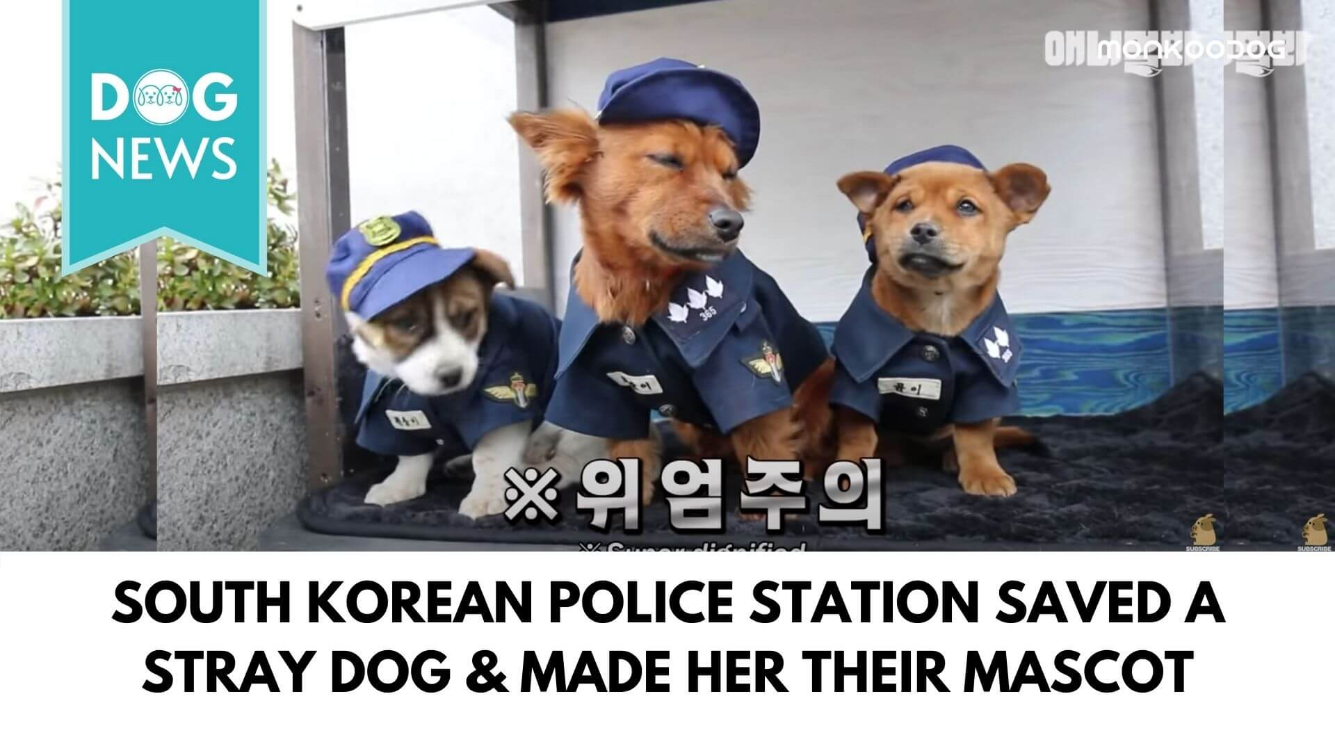 South Korean Police Station adopted a stray dog as their lucky mascot
