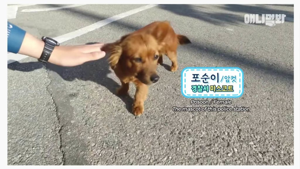 South Korean Police Station adopted a stray dog as their lucky mascot.
