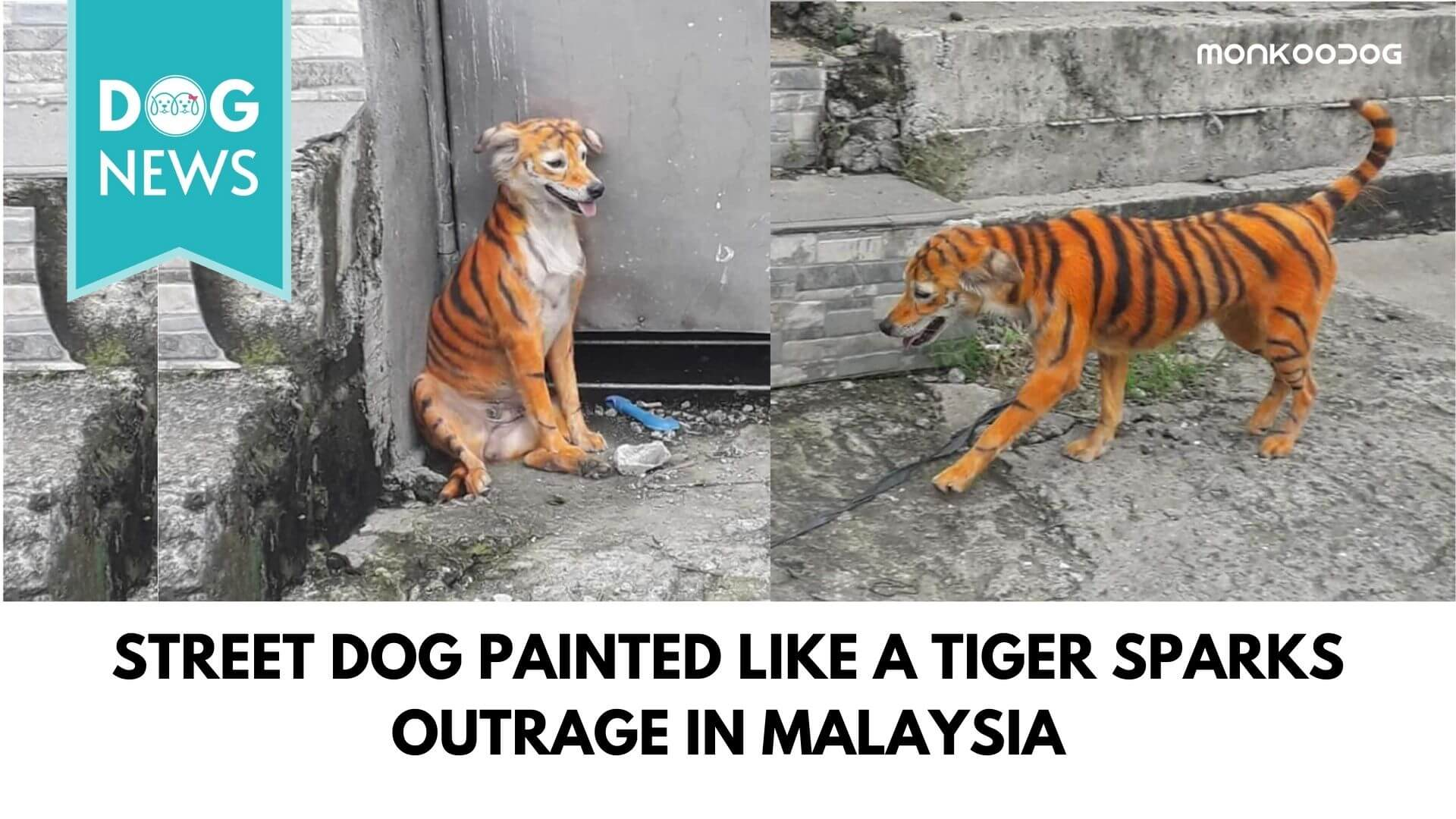 Street Dog Painted Like A Tiger Sparks Outrage In Malaysia