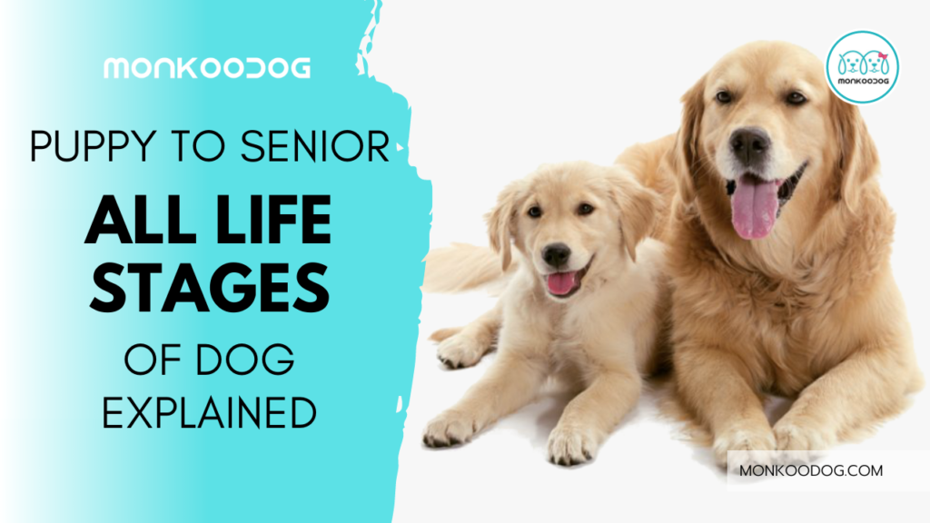 THE SIX STAGES OF YOUR DOG'S LIFE AND ALL THAT YOU NEED TO KNOW ABOUT EACH OF THE STAGES