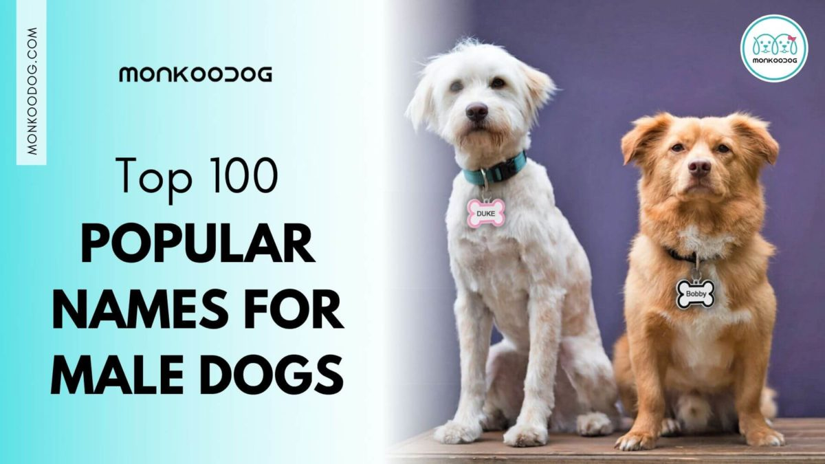 Top 100 Popular Names for Male Dogs
