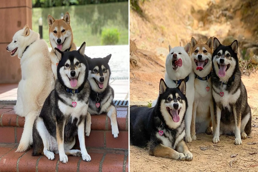 Unphotogenic-Doggo-Goes-Viral-For-Ruining-Group-Pics-We-Can-All-Relate