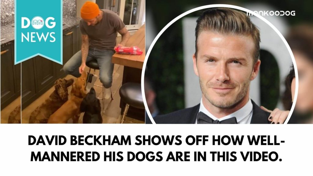 Victoria Beckham names David Beckham - The Dog Whisperer in viral social media post