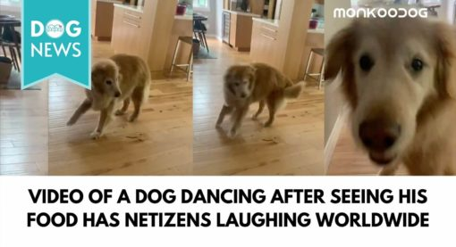 Video of a dog dancing after seeing his food has netizens laughing worldwide