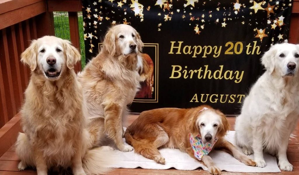 augie_celebrating_20_years_old