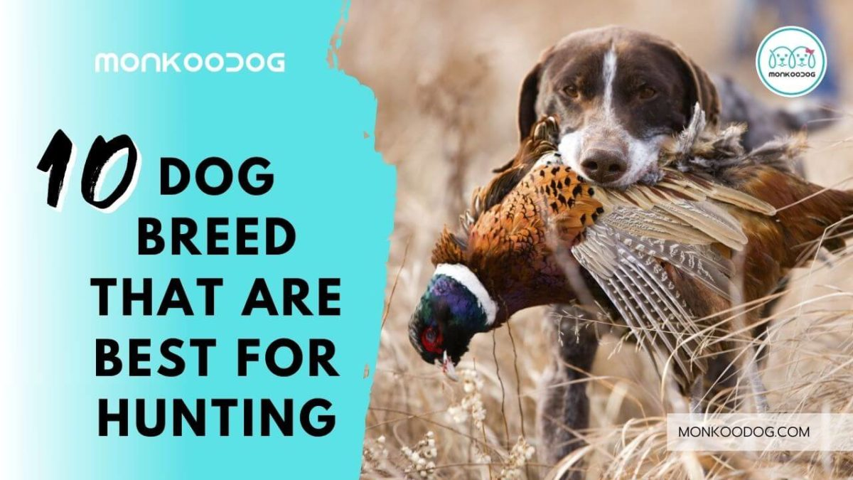 Top 10 Hunting Dog Breeds that are Best in Hunting