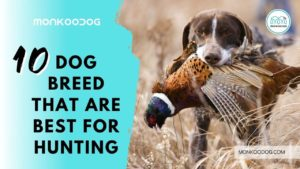 top 10 best hunting dog breeds
