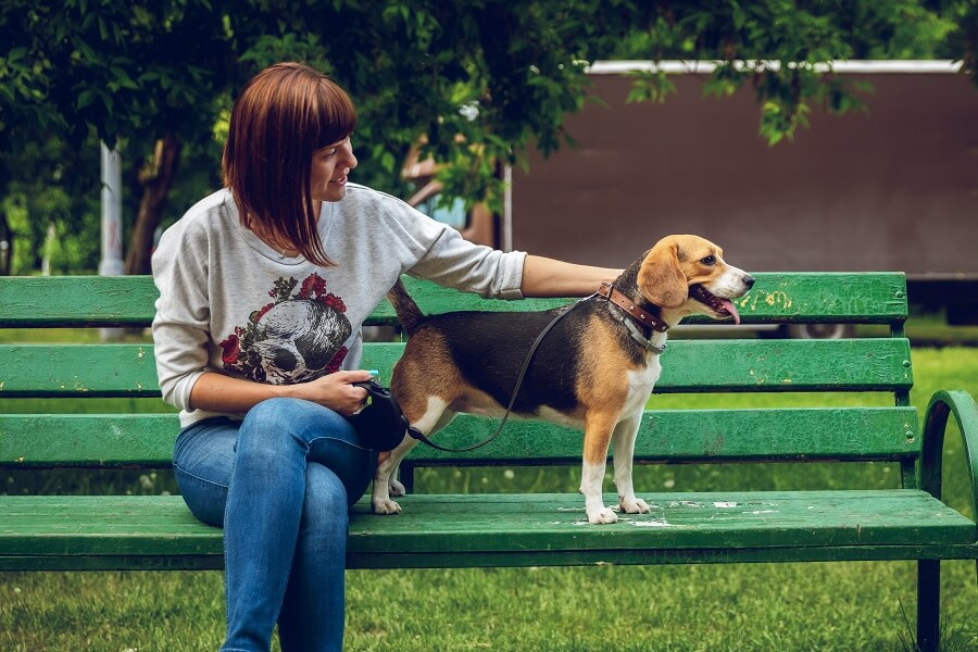 woman sitting on bench beside a beagle