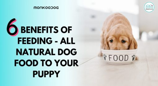 6 Benefits of Feeding Your Pup With All-Natural Dog Food