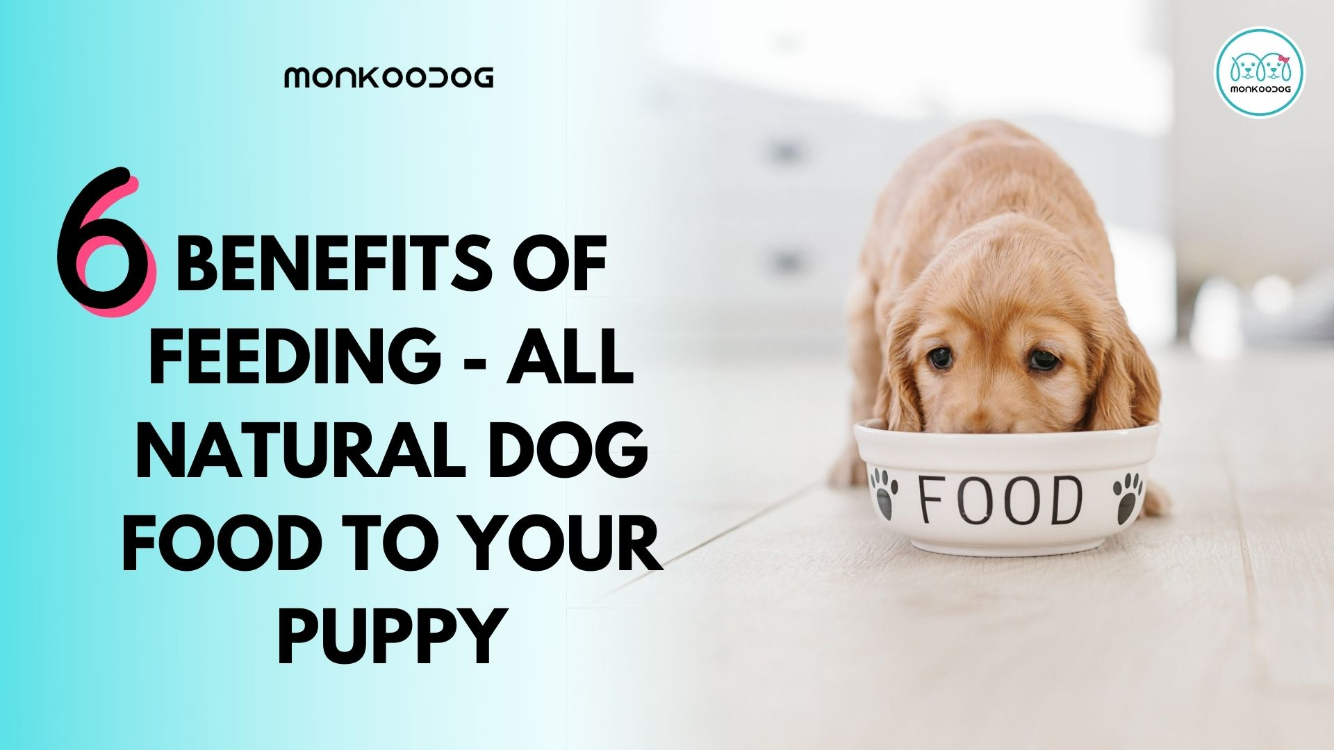 6 benefits of feeding - all natural dog food to your puppy