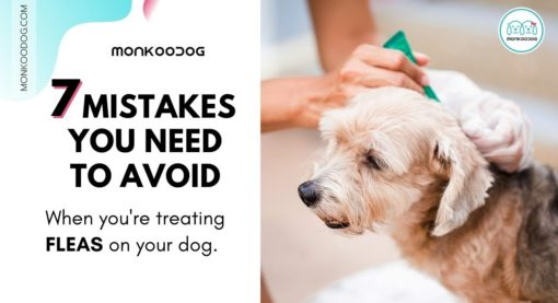 7 Mistakes You Need to Avoid When Treating and Preventing Fleas on Your Dog