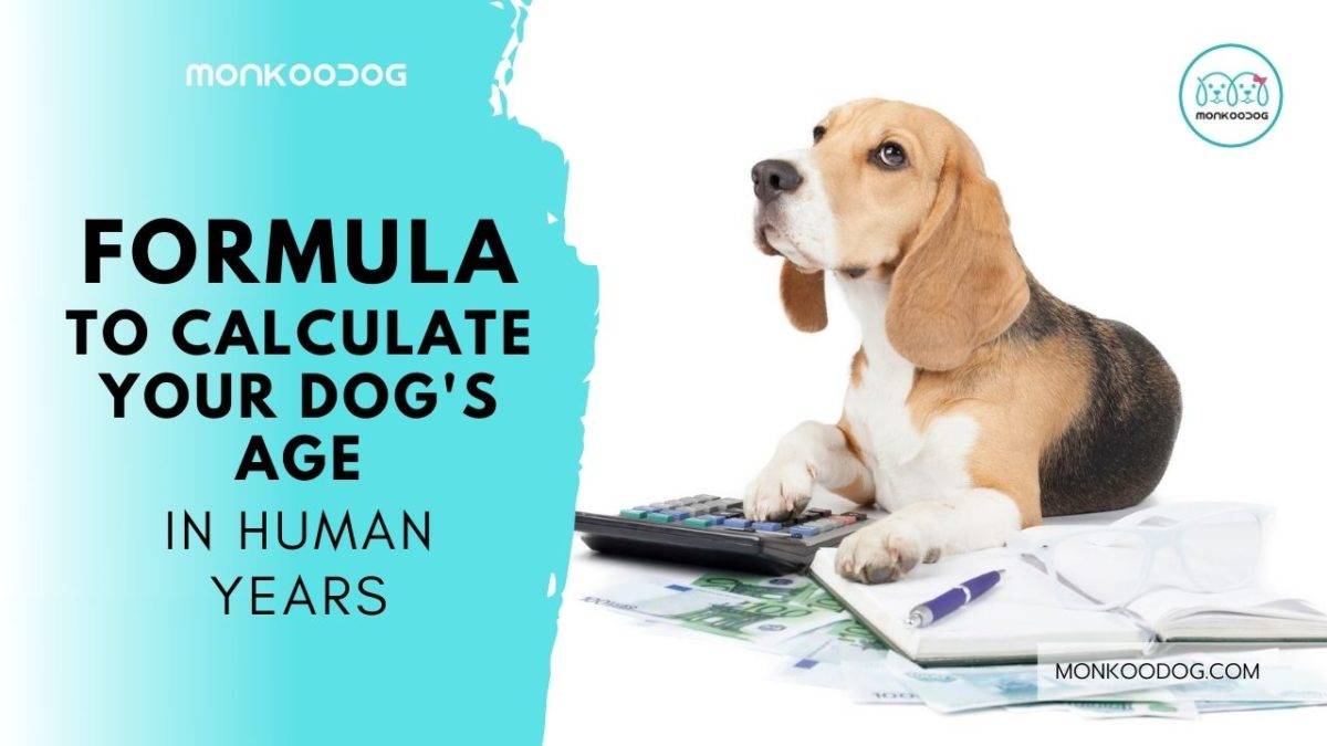 Dog Age Calculator – The Formula That Calculates Your Dog's Age Vis-A-Vis Human Years