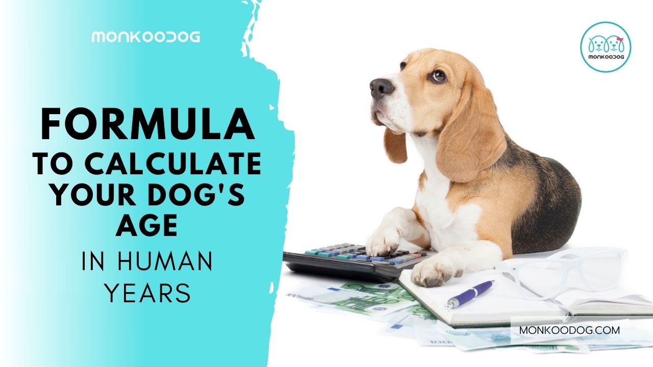 Dog Age Calculator - The Formula That Calculates Your Dog's Age Vis-A-Vis Human Years