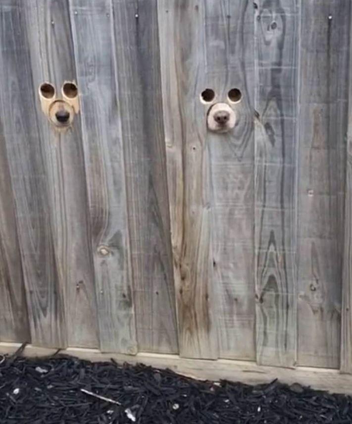 Dog Hole