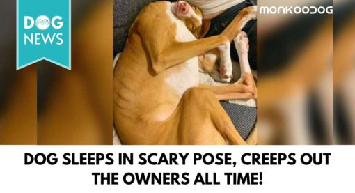 Dog Sleeps In Scary Pose, Creeps Out The Owners All Time!