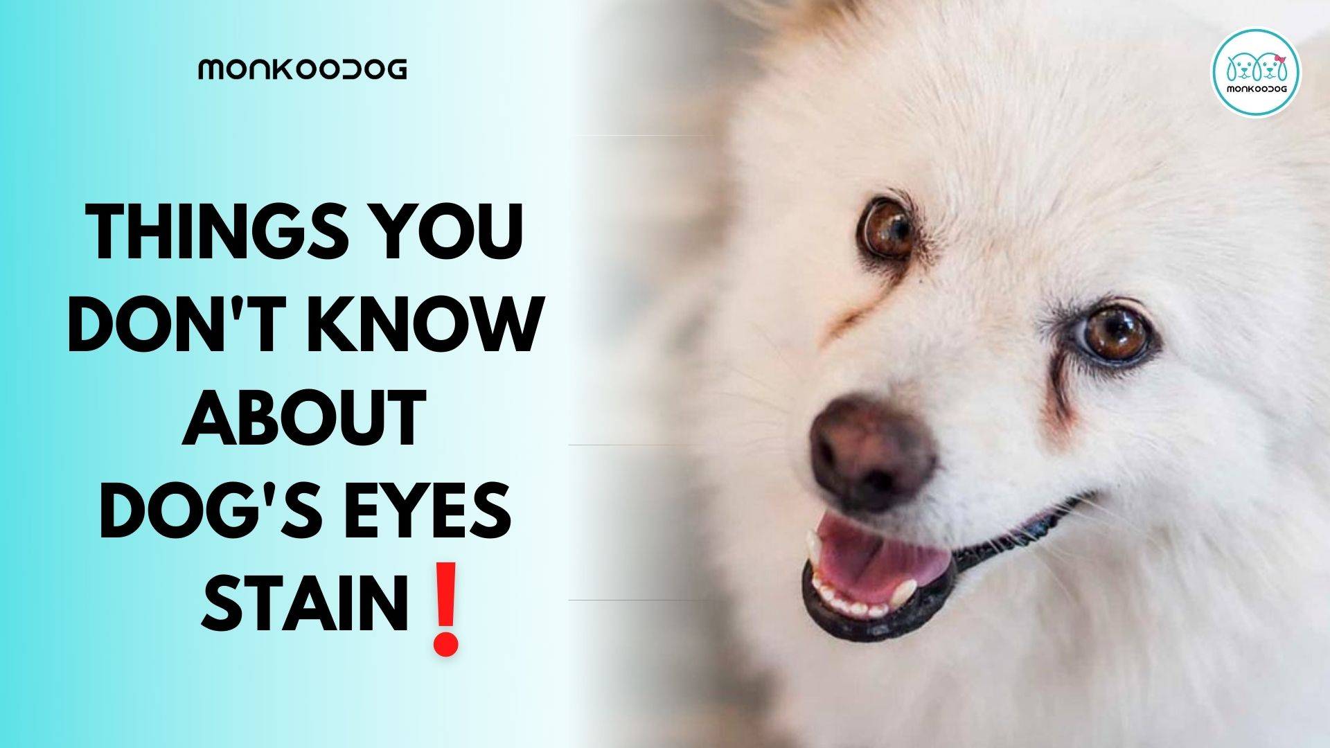 Everything You Need To Know About Dog Tear Stains