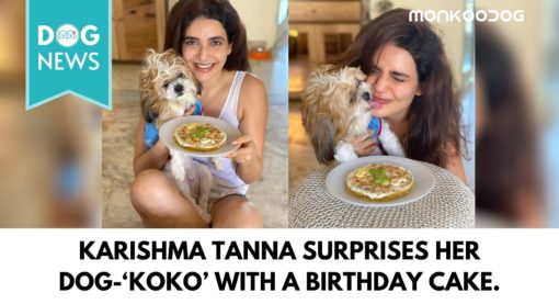Karishma Tanna surprises her cute little dog-'koko' with a yummy cake on his birthday