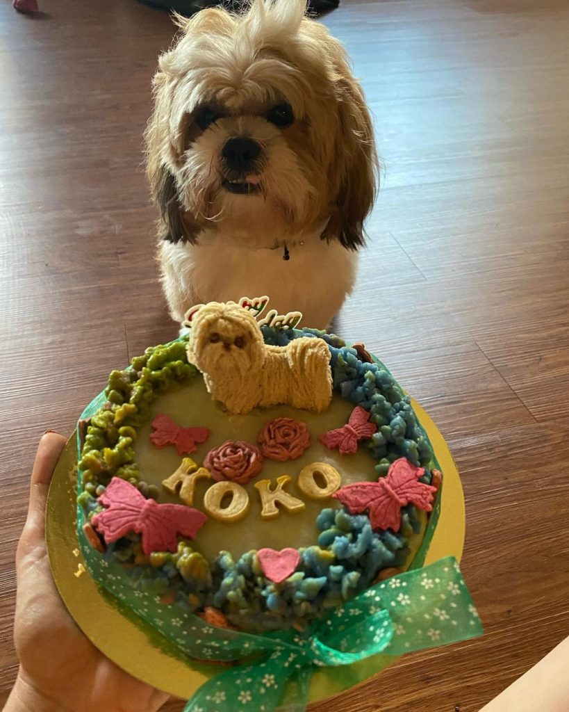 Pet Dog Koko