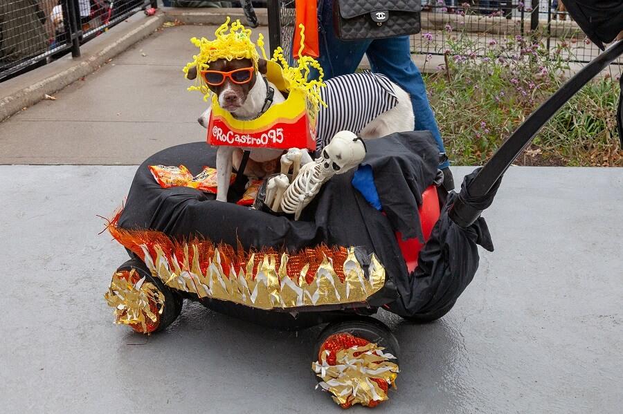 Tompkins Halloween Dog Parade 2