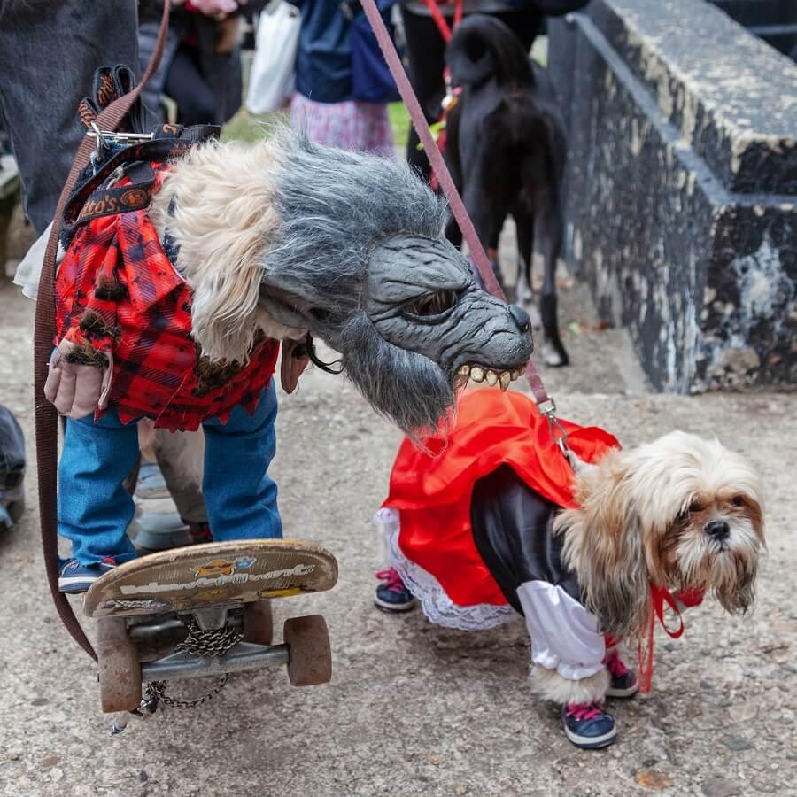 Tompkins Halloween Dog Parade 2020
