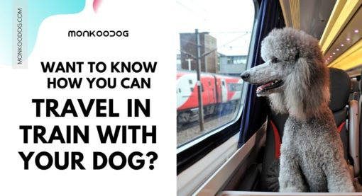 Top Tips For Travelling On A Train With Your Dog