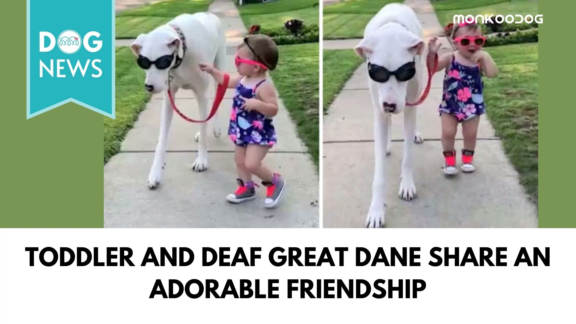 Video of a 17-month-old girl insisting to walk a huge deaf and blind dog has the internet going emotionally crazy.