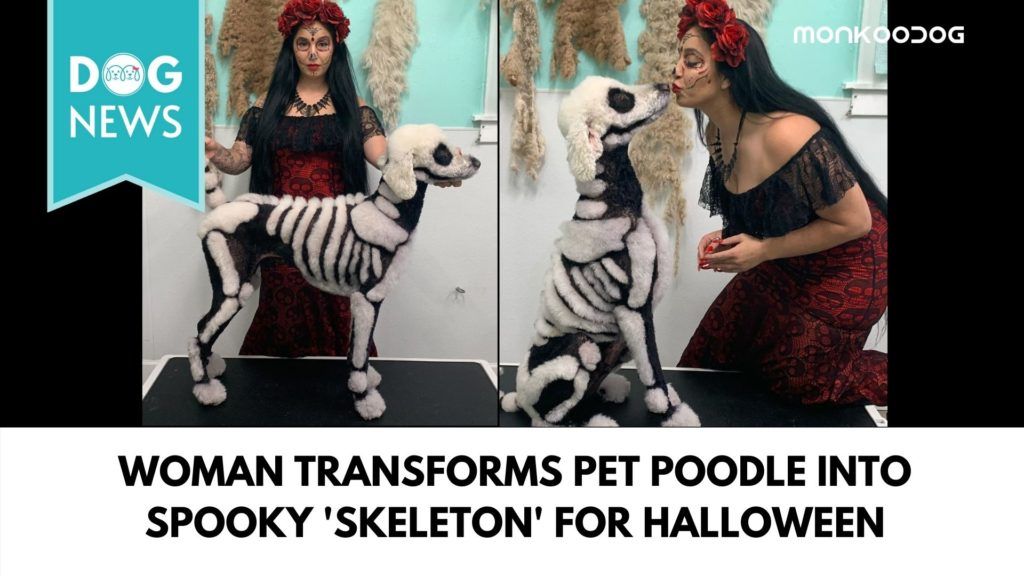 Woman Transformed Up Pet Poodle As A Skeleton
