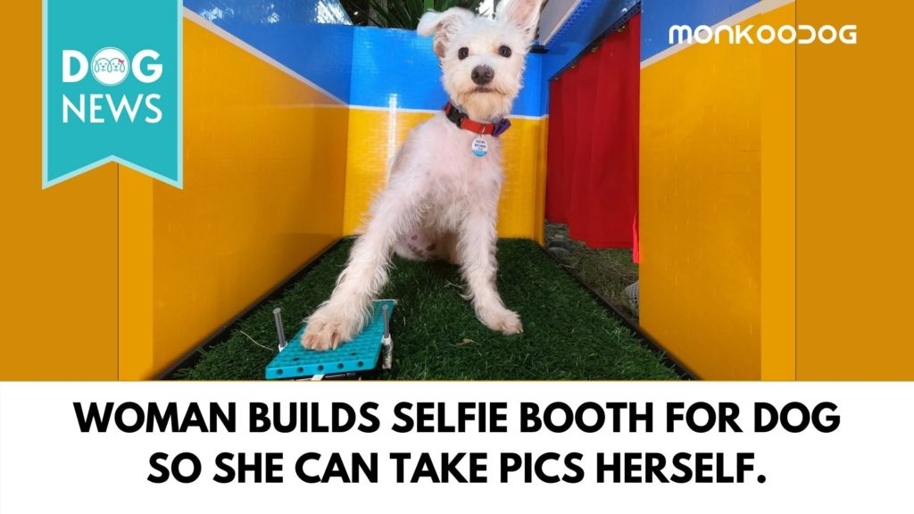 Youtuber creates a Selfie Booth exclusively for her dog to take pictures by itself
