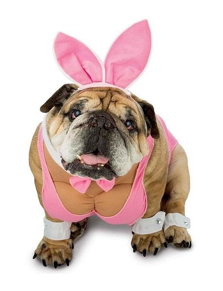 hunny-bunny-dog-costume