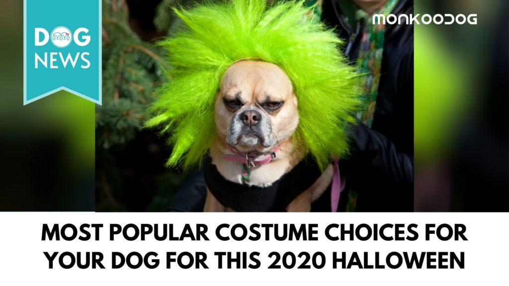 most popular costume choices for your dog for this 2020 halloween