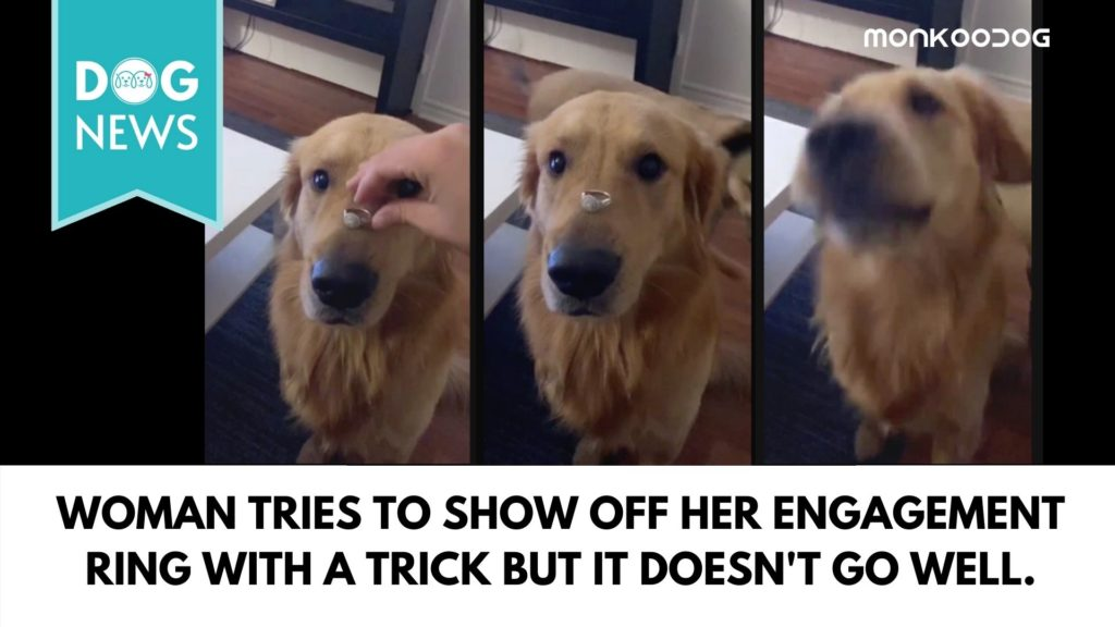 woman tries to show off her engagement ring with a trick but it doesn't go well.