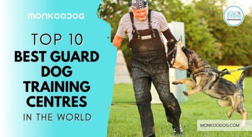 Top 10 Guard Dog Training Centres In The World