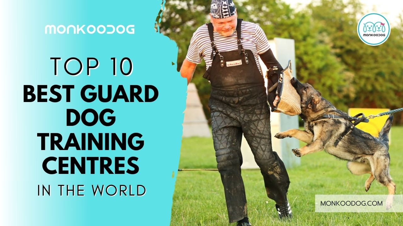 10 BEST GUARD DOG TRAINING CENTRES IN THE WORLD