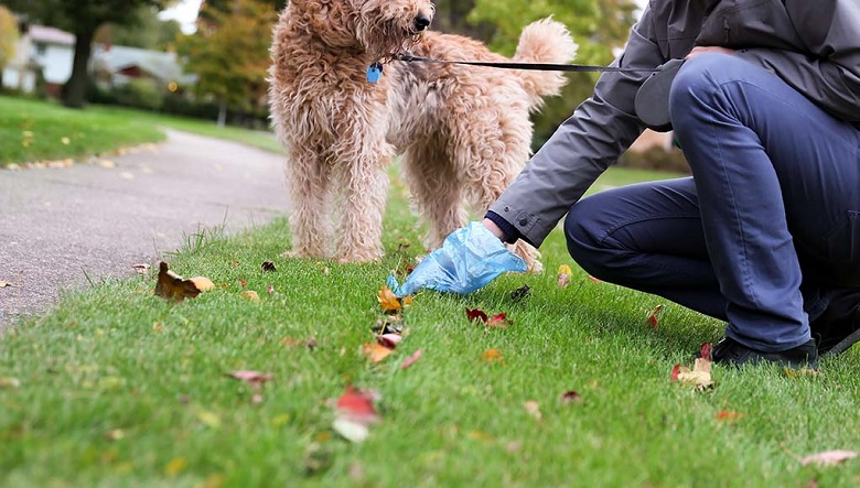 6-Reasons-You-Should-Always-Pick-Up-Your-Dog's-Poop