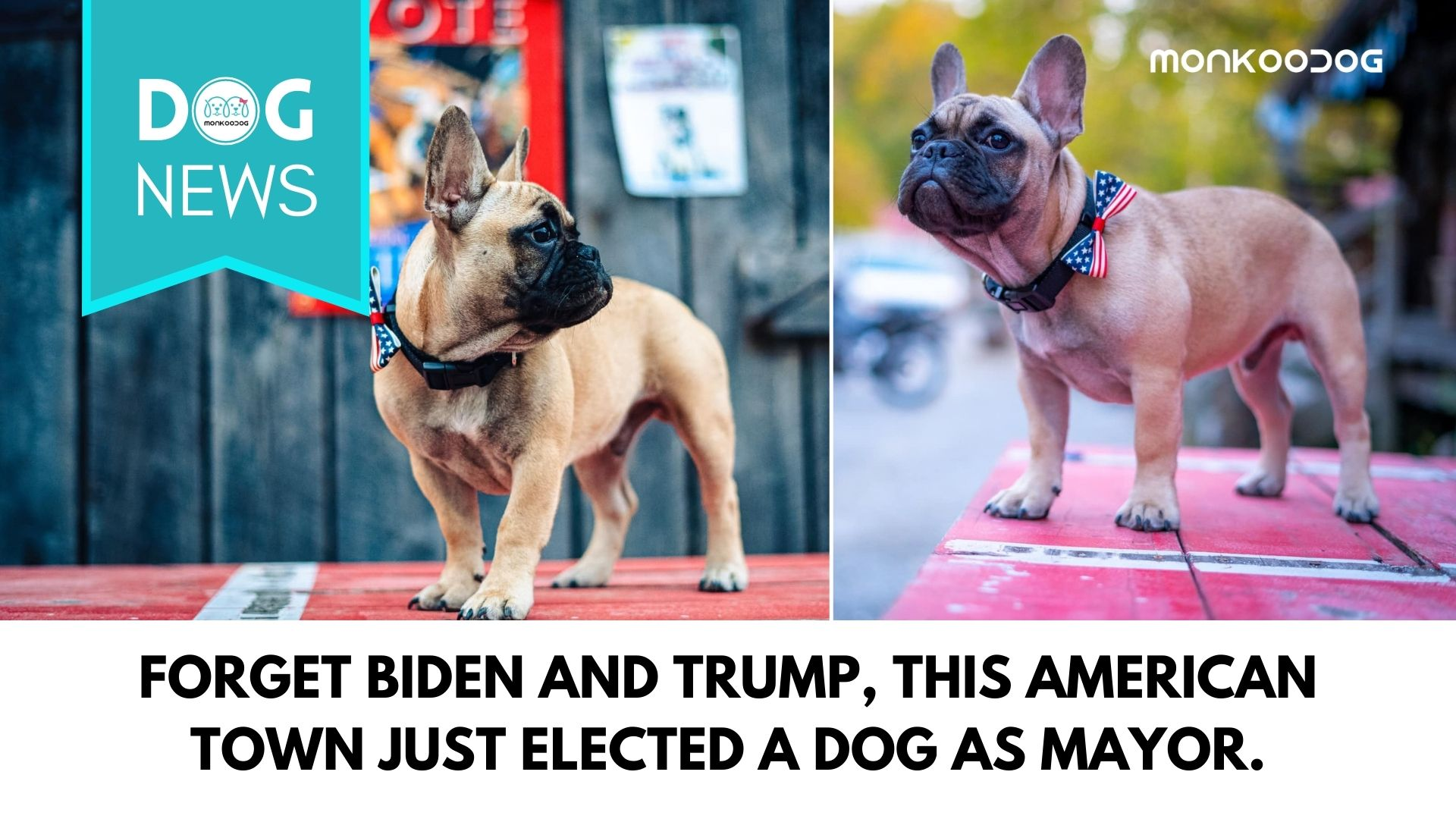 Amidst the Trump vs Biden US election scenario, Kentucky chooses a dog as their Mayor.