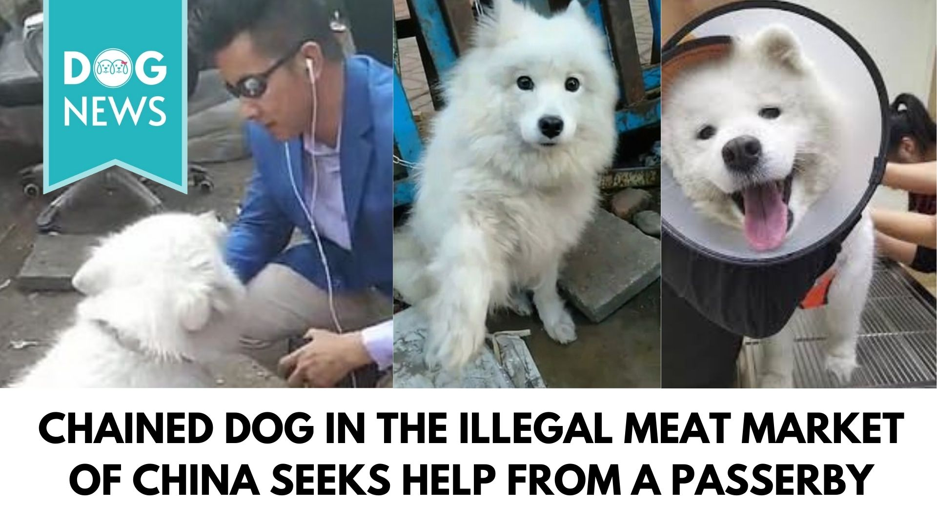 Chained dog in the illegal meat market of China seeks help from a passerby
