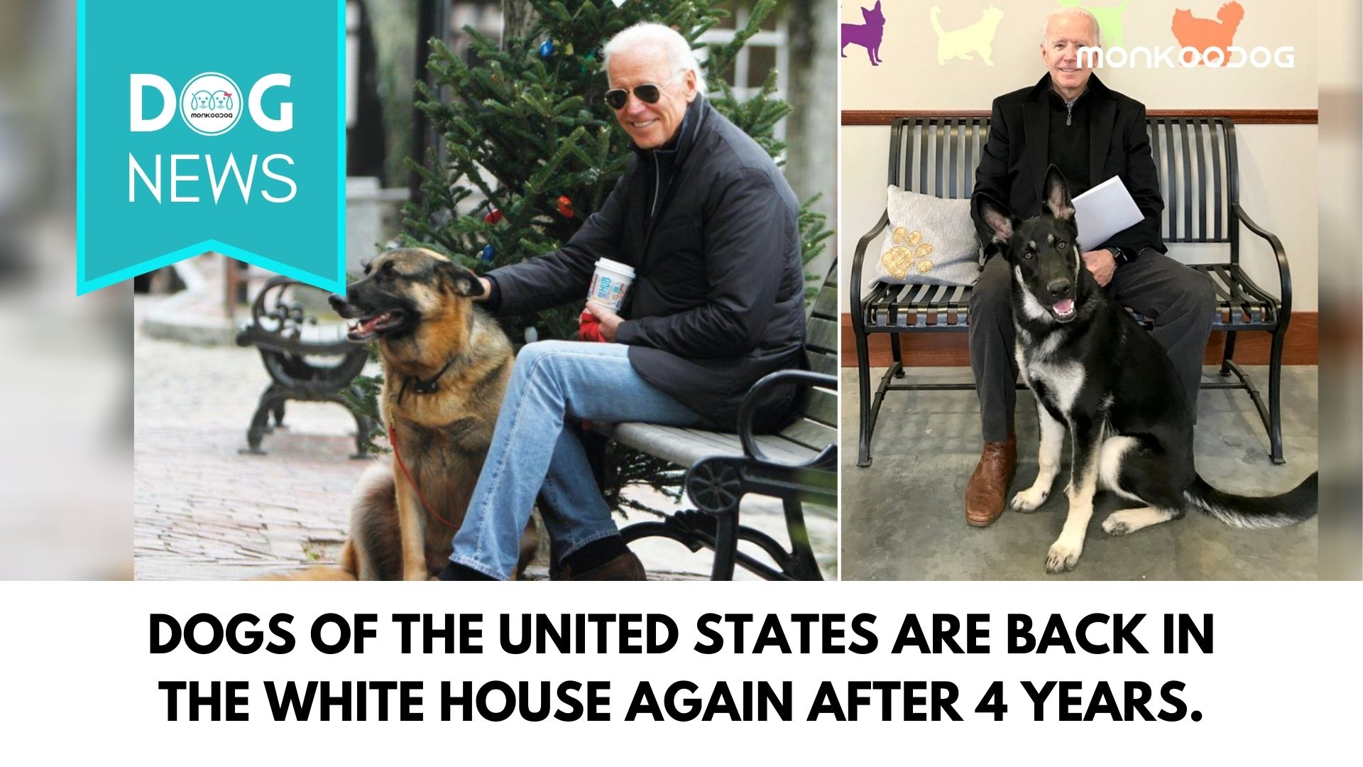 DOTUS Are Going To Be Back In The White House As Biden Claims The Crown Of The President-ElectDOTUS Are Going To Be Back In The White House As Biden Claims The Crown Of The President-Elect