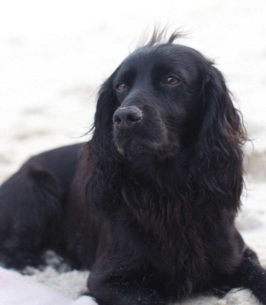 Dog Lupo