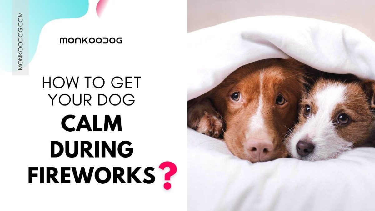 Dog Scared Of Fireworks? 3 Ways To Get Your Dog Calm Down During Fireworks
