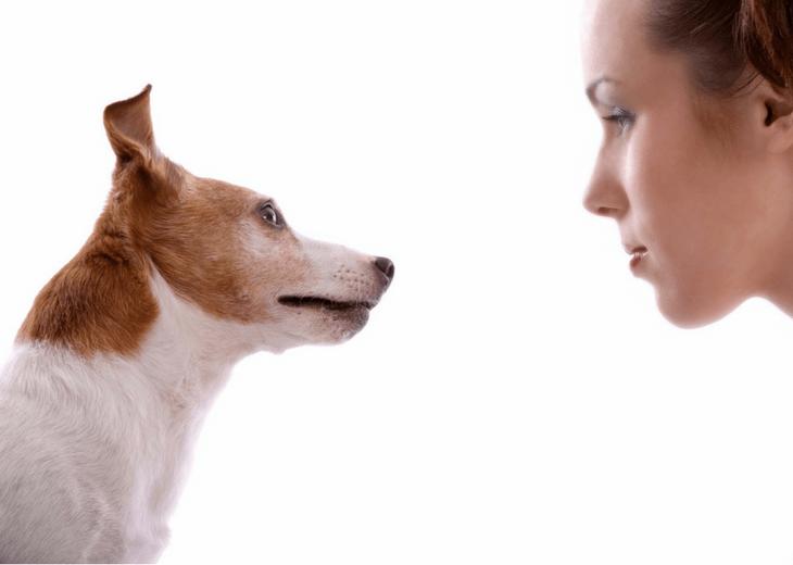 Eye-Contact-With-Dog
