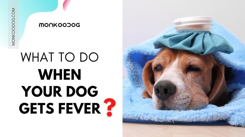 Fever in Dogs Causes, Symptoms, And Treatment